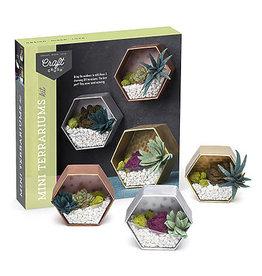 Ann Williams Craft Crush Mini Terrariums