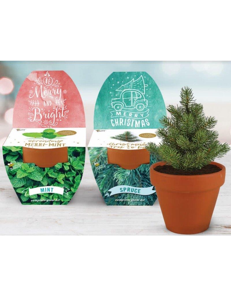 Buzzy Holiday Classic Terracotta Grow Kit