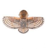 HearthSong Hooded Owl Wings