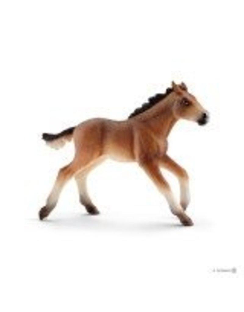Schleich Mustang Foal