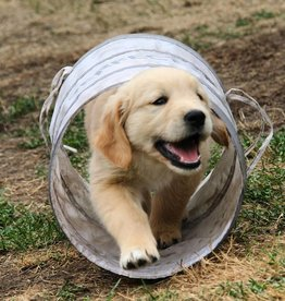 JAPPE Puppy Class