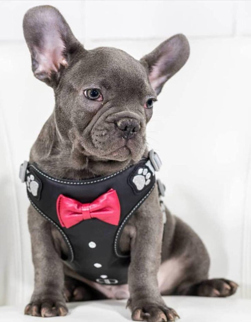 Pretty Paw James Bond Harness