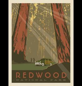 Prints Redwood National Park 11x14 Print