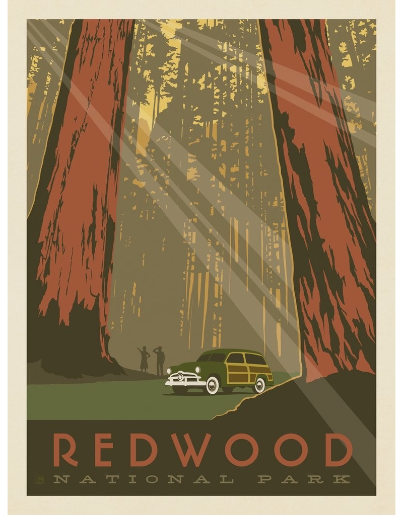 Prints Redwood National Park 11x14 Print