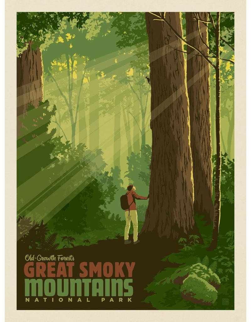 Prints Great Smoky Mountains National Park Old Growth Forest 11x14 Print