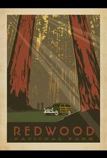 Prints Redwood National Park 18x24 Poster