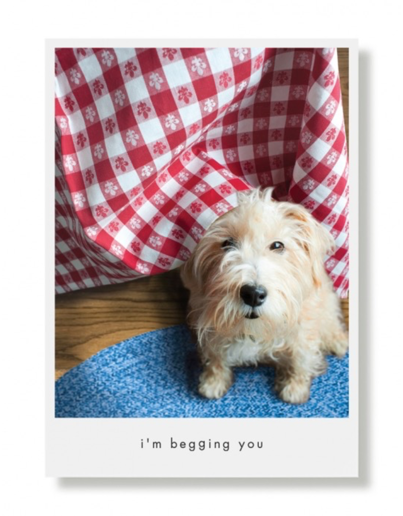 Greeting Cards Murphy Begging Birthday Card