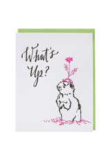 Greeting Cards What's Up? Gopher Single Card