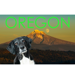 Postcards Finn Greetings From Oregon Postcard
