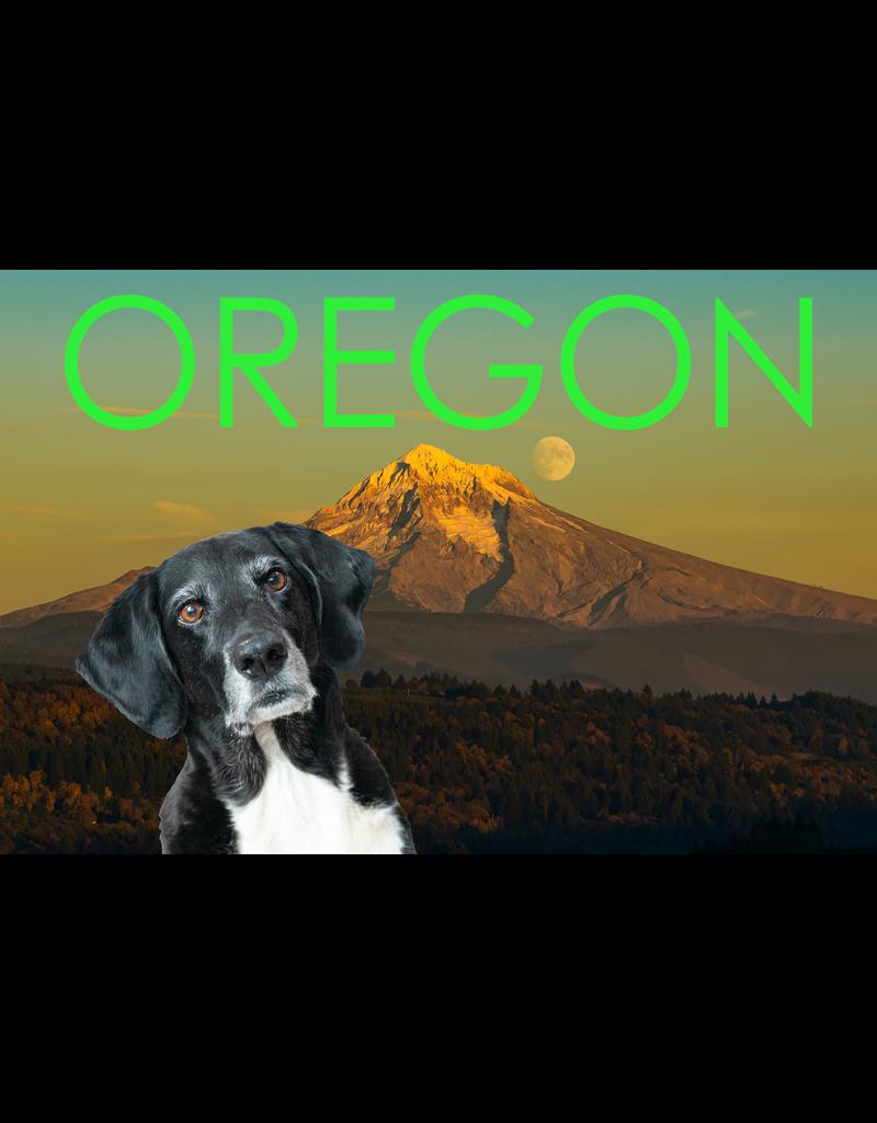 Postcards Finn Greetings From Oregon Postcard