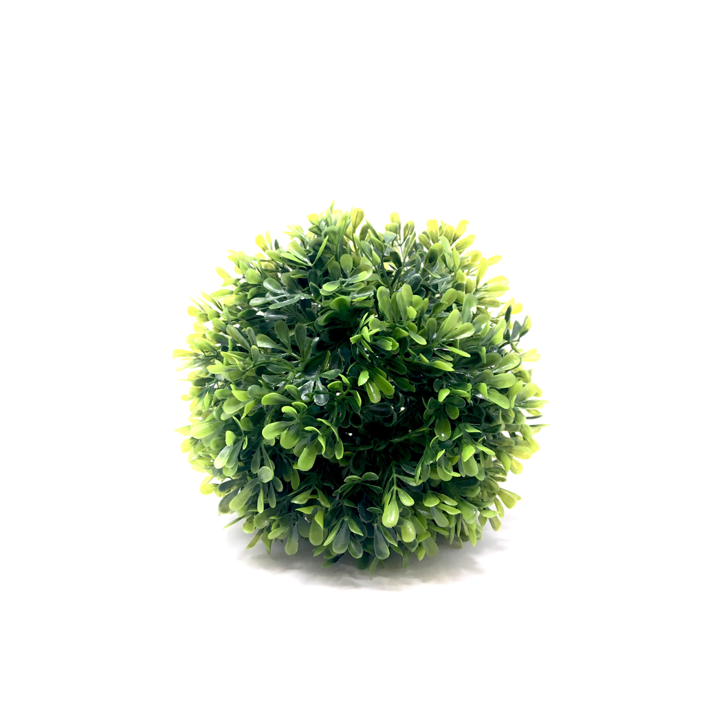 BOXWOOD BALL, 6.5""