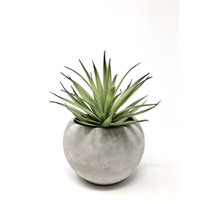 SWORD GRASS BUSH, 8.5""
