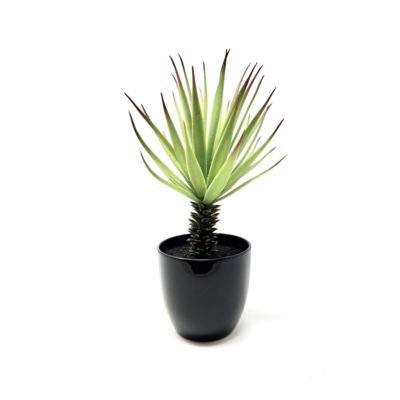 MINI POTTED YUCCA BUSH, 10""