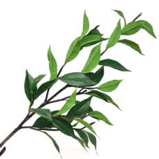 Tuin GREEN TEA LEAF BRANCH