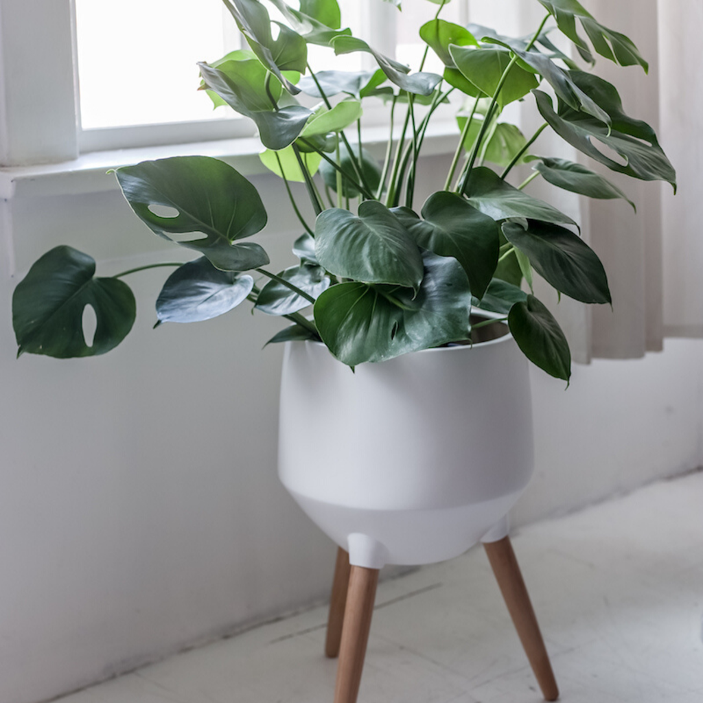 Style in Form CIRCA BASE PLANTER, WHITE, LARGE