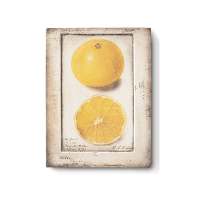 Sid Dickens SID DICKENS TILE, CITRON