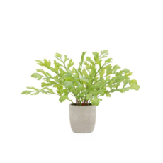 Torre Tagus SOLARO POTTED FAUX PLANT, RABBIT EAR