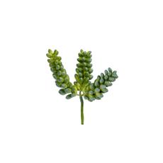 PEARL SUCCULENT GREEN PICK, SMALL