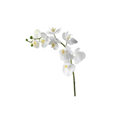 Torre Tagus FAUX WHITE ORCHID, SINGLE STEM