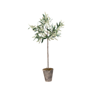 "Napa POTTED OLIVE TREE, 46""H"
