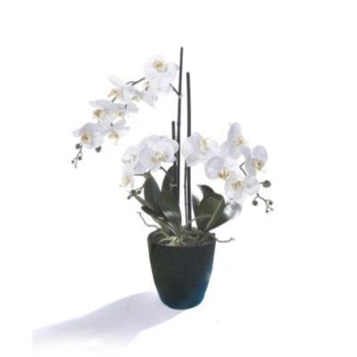PHALAENOPSIS ORCHID, WHITE W/ BLACK POT