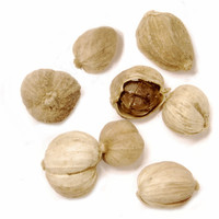 Cardamome blanche chinoise - Épices de cru - 15g