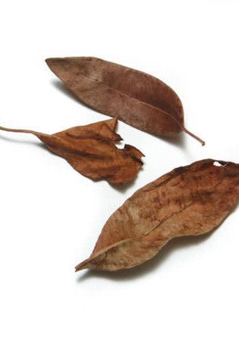 Épices de cru - Feuilles de salam - 4g