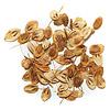 Épices de cru - Graines d'Angélique - 15 g