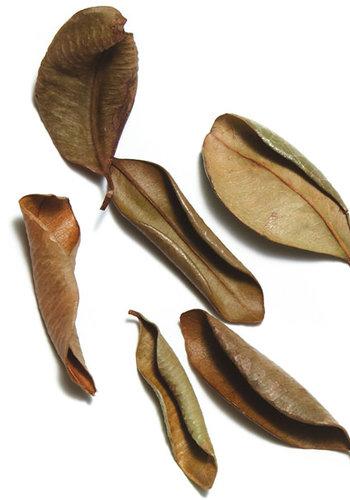 Épices de cru - Laurier antillais - 15g
