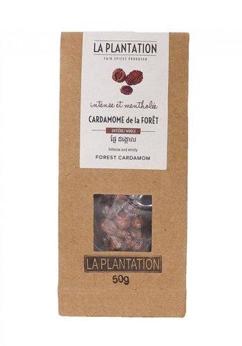 Cardamome de la Forêt (Intense et mentholée) | La Plantation | 50g