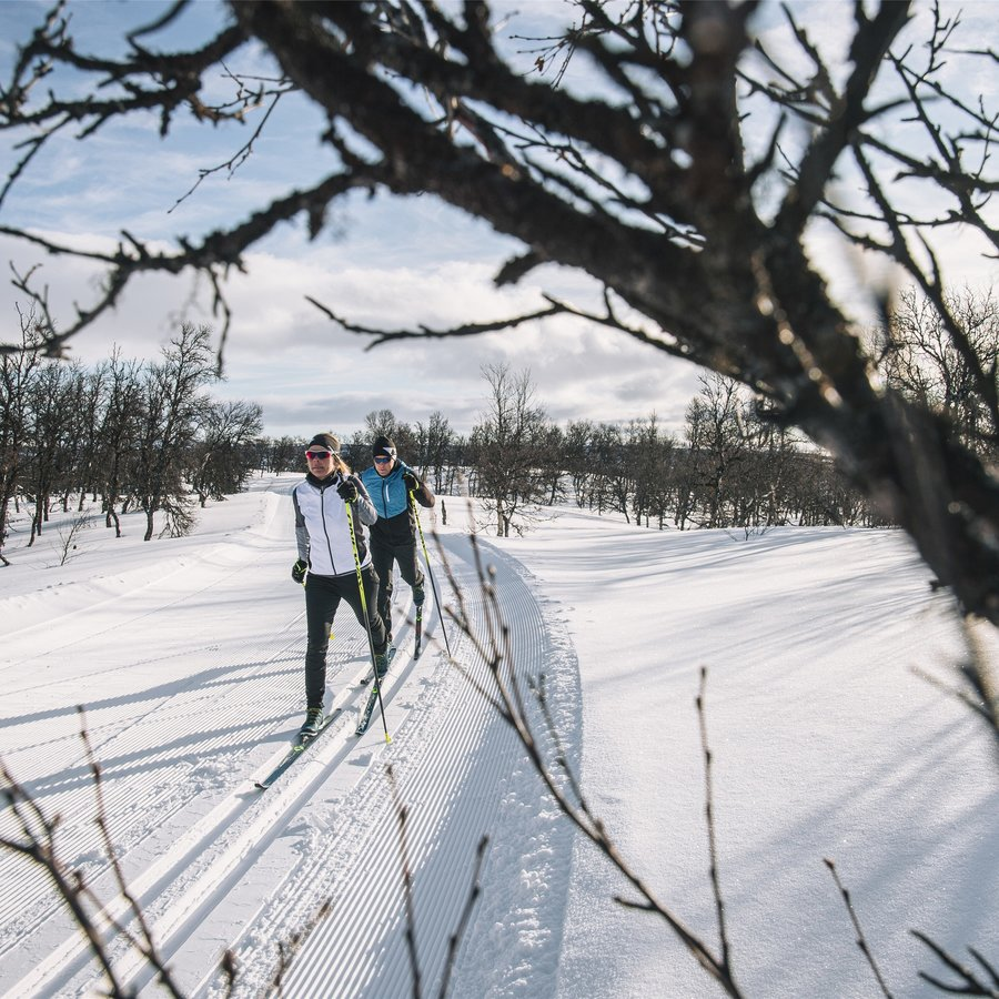 Nordic | Crosscountry Ski Buying Guide