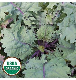 Seed Saver's Exchange Kale, Red Russian