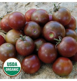 Seed Saver's Exchange Tomato, Black Cherry