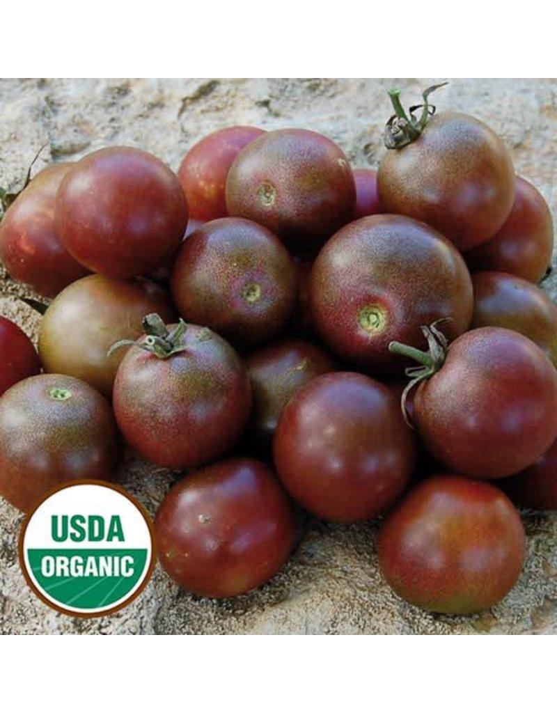 Seed Saver's Exchange Tomato, Black Cherry