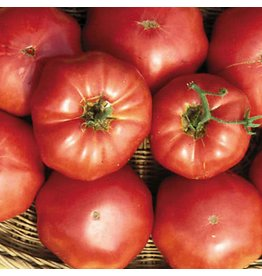 Seed Saver's Exchange Tomato, Brandywine (Sudduth's)