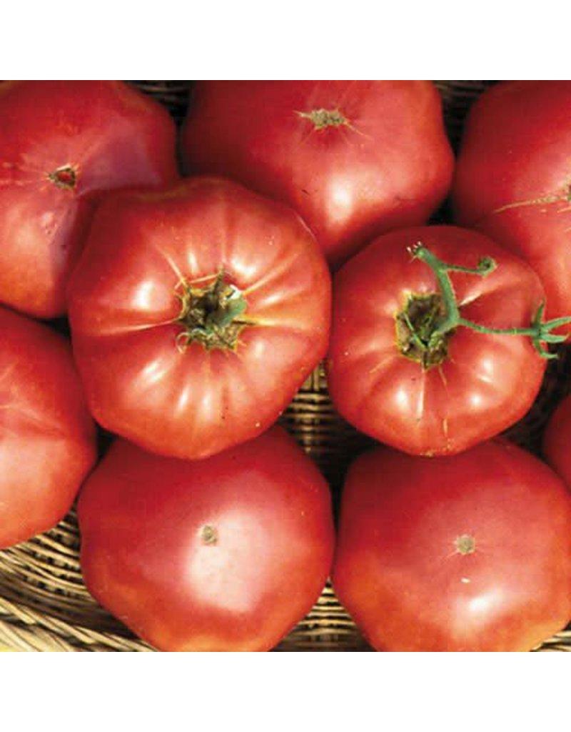 Seed Saver's Exchange Tomato, Brandywine (Sudduth's)