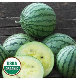 Seed Saver's Exchange Watermelon, Petite Yellow