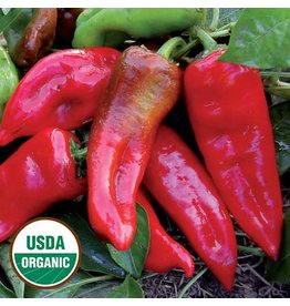 Seed Saver's Exchange Pepper, Tolli's Sweet Italian