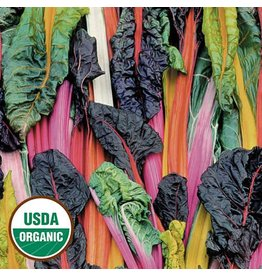 Seed Saver's Exchange Swiss Chard, Five Color Silverbeet