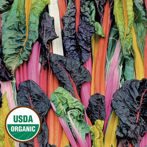 Swiss Chard, 5 Color Silverbeet
