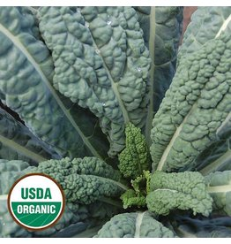 Seed Saver's Exchange Kale, Lacinato Seed