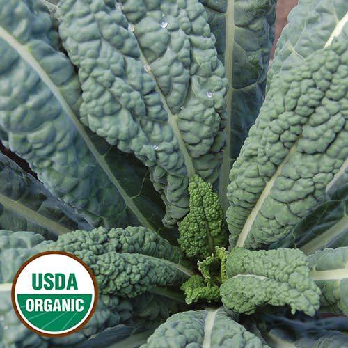 Kale, Lacinato Seed