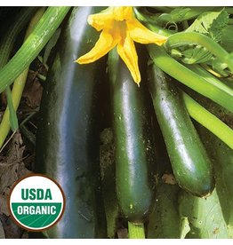 Seed Saver's Exchange Squash, Black Beauty Zucchini