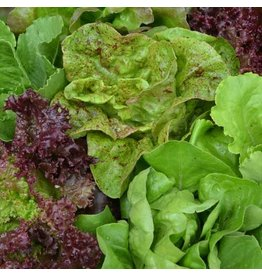 Seed Saver's Exchange Lettuce, SSE Mixture Seed