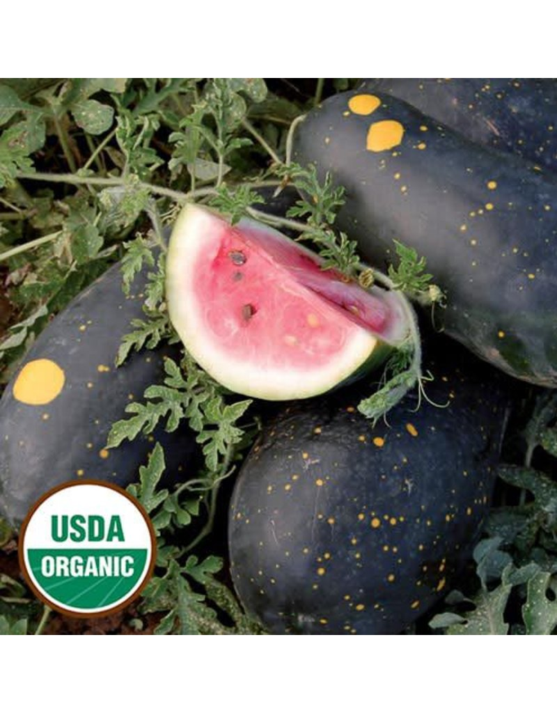 Seed Saver's Exchange Watermelon, Moon & Stars (Cherokee)