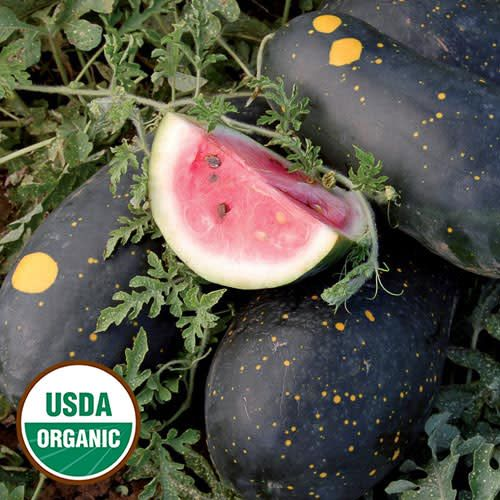 Watermelon, Moon & Stars (Cherokee) Seed