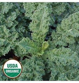 Seed Saver's Exchange Kale, Dwarf Blue Curled
