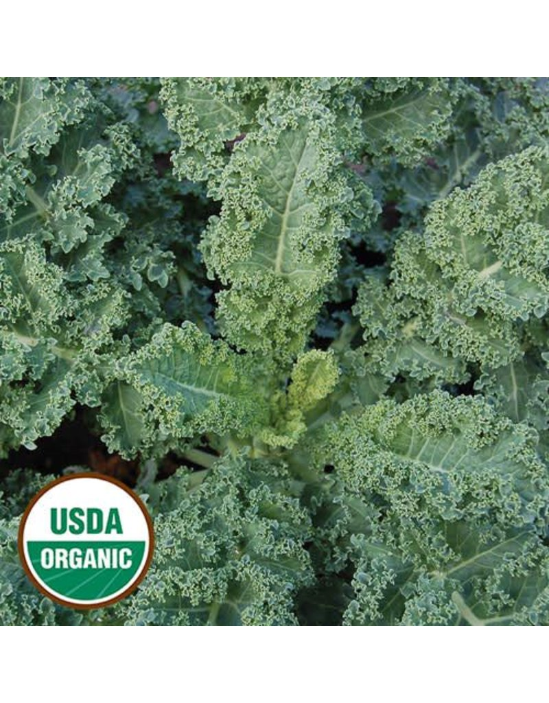Seed Saver's Exchange Kale, Dwarf Blue Curled