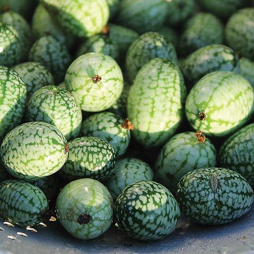 Cucumber - Mexican Sour Gherkin