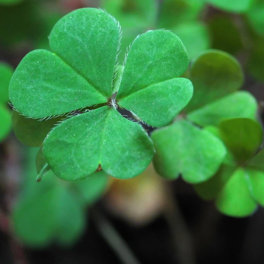 Garden Sprinkles - Good Luck